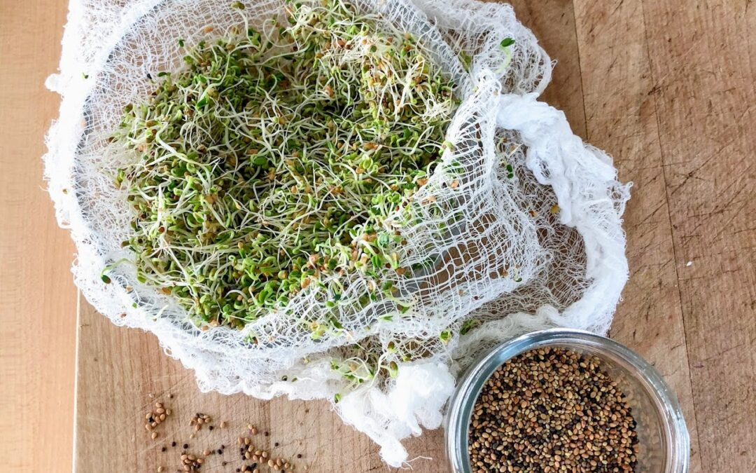 Growing Your Own Sprouts